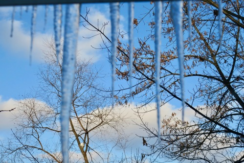 cold-blue-morning-with-icicles