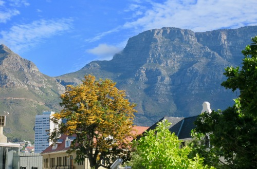 diverse-plants-in-cape-town-and-around-table-mountain