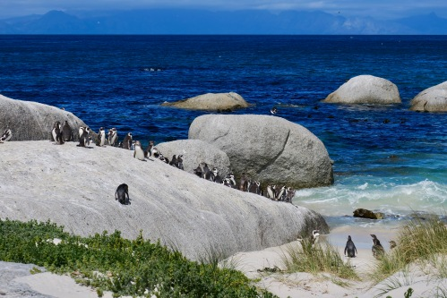 granite-boulders-and-african-penguins-at-boulders-south-africa