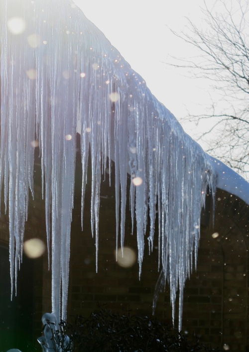 icicles-and-snow-falling