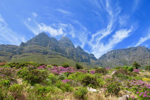 orographic-clouds-forming-behind-lions-head-gorgeous-wildflowers-near-table-mountain
