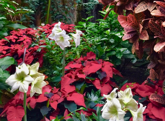 poinsettias-and-orchids-at-meijer-garden-12-16