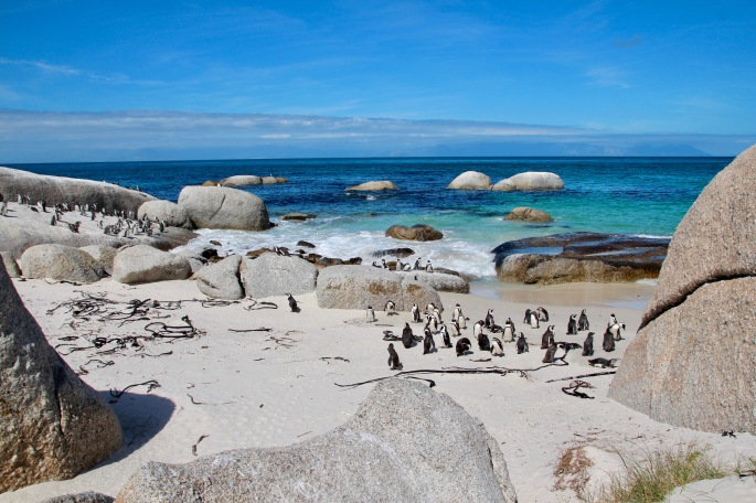 sheltered-bay-and-african-penguins-at-boulders-south-africa