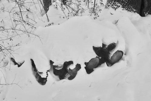 snowy-pile-of-wood