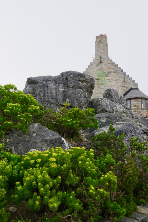 yellow-fynbos-and-shop-at-the-top-of-table-mountain
