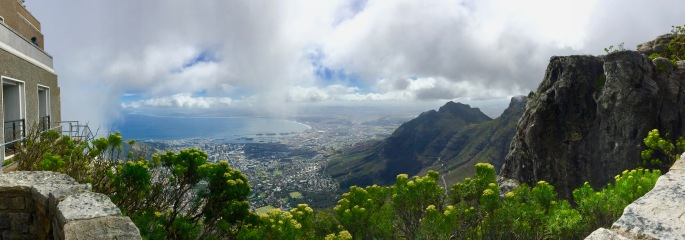 yellow-fynbos-edges-the-view-of-cape-town-from-table-mountain