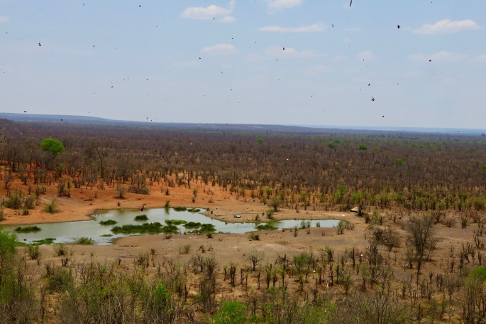 debris-blowing-in-wind-zimbabwe