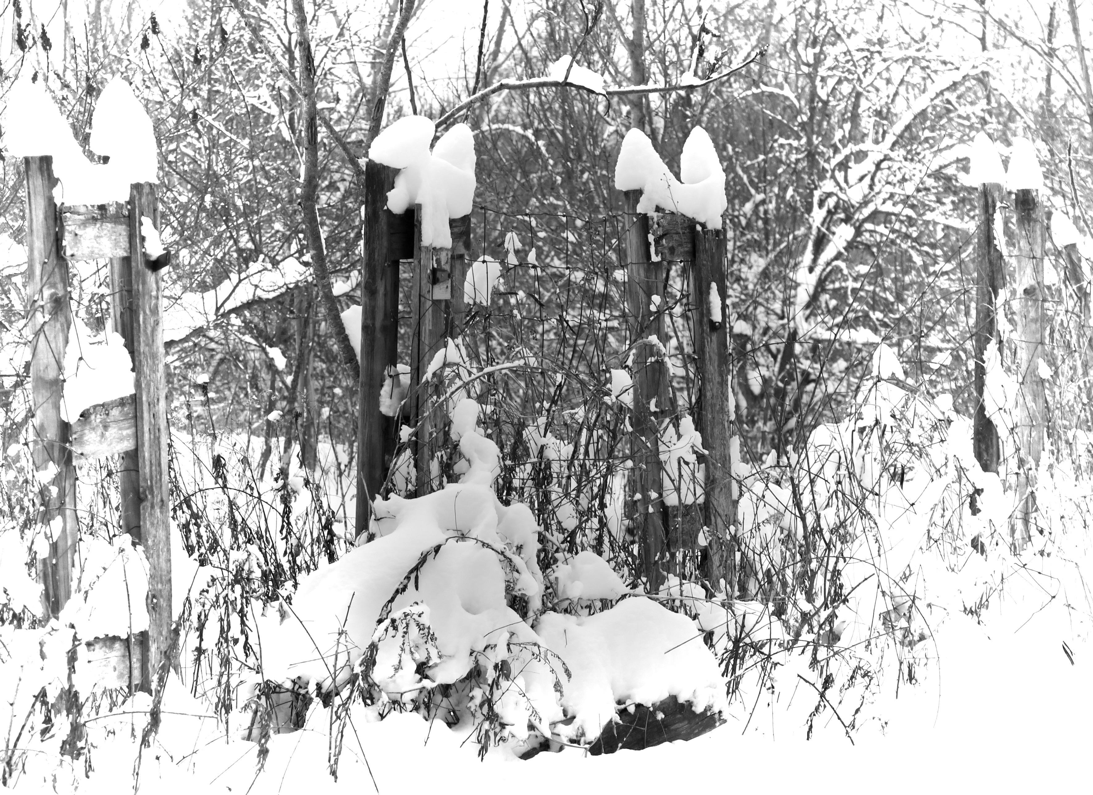 old-fence-around-a-garden-in-winter
