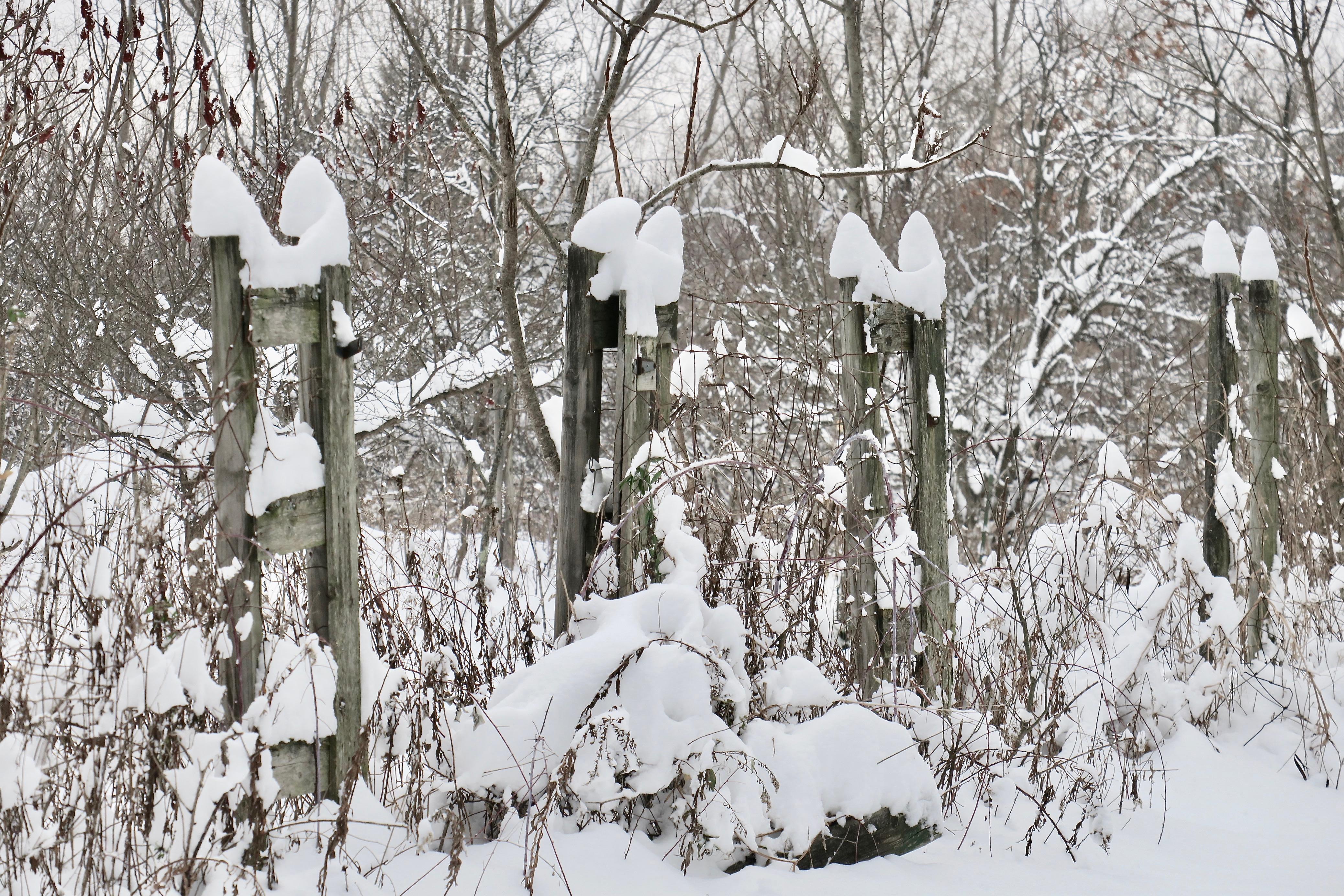 snowy-michigan-garden