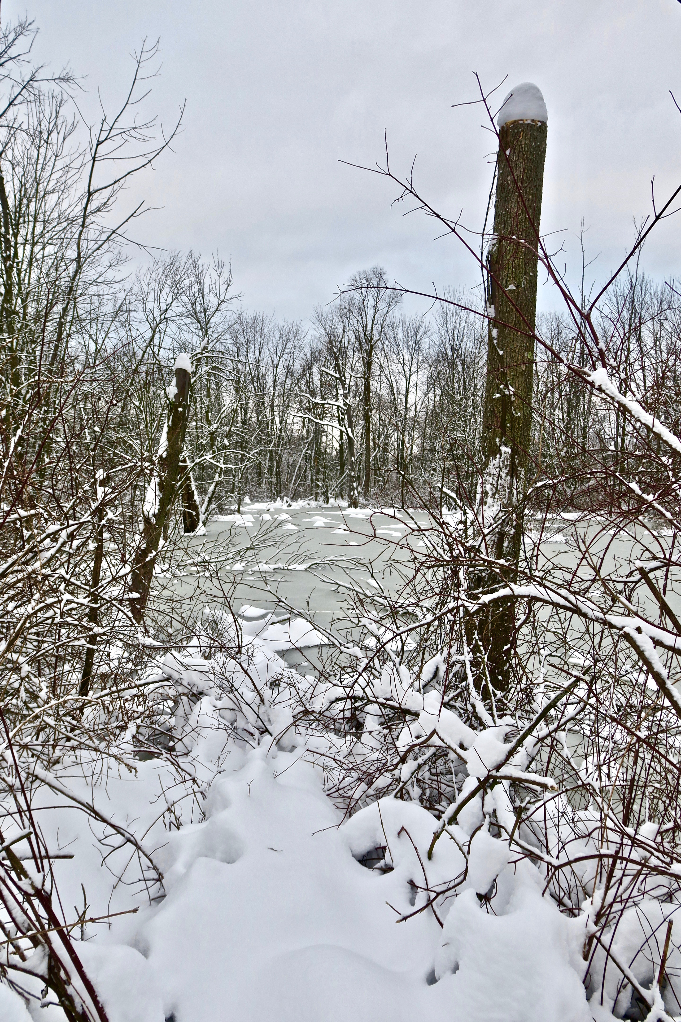 snowy-swamp