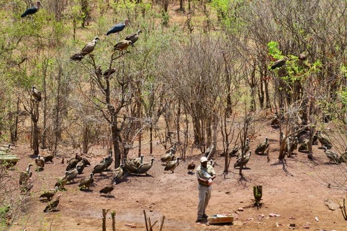 vulture-restaurant-victoria-falls-safari-lodge