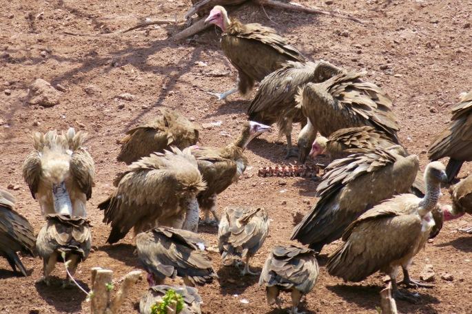 vultures-and-bones