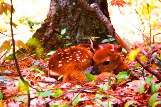 112-newborn-fawn