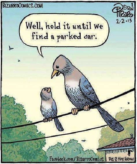 birds-need-potty-breaks-too