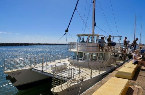 blue-dolphin-charter-ii-in-eleele-kauai