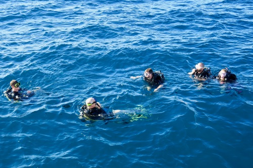 scuba-divers-on-blue-dolphin-charter-cruise