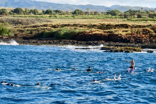 snorkling-on-blue-dolphin-boat-tours