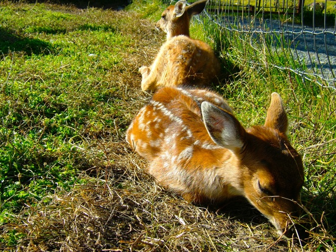 twin-fawns-09-14-04