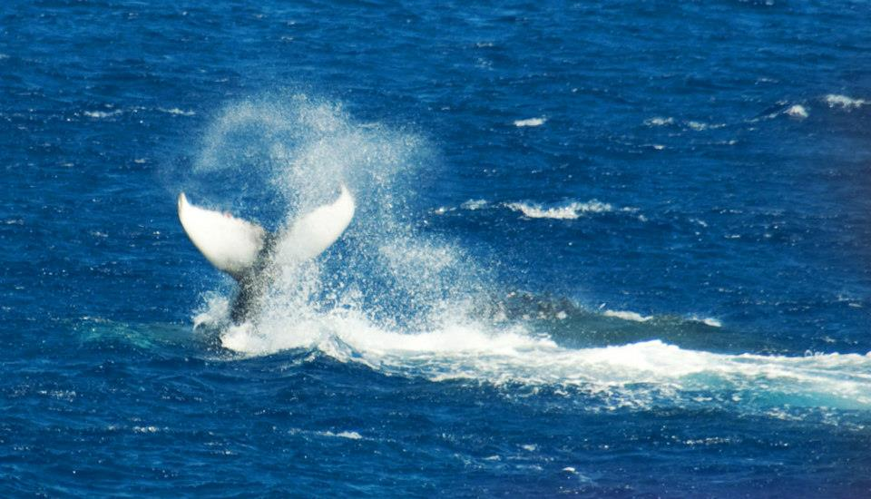 whale-tail-by-michael