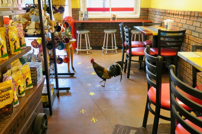 rooster-walking-through-kaloa-mill-ice-cream-and-coffee-shop