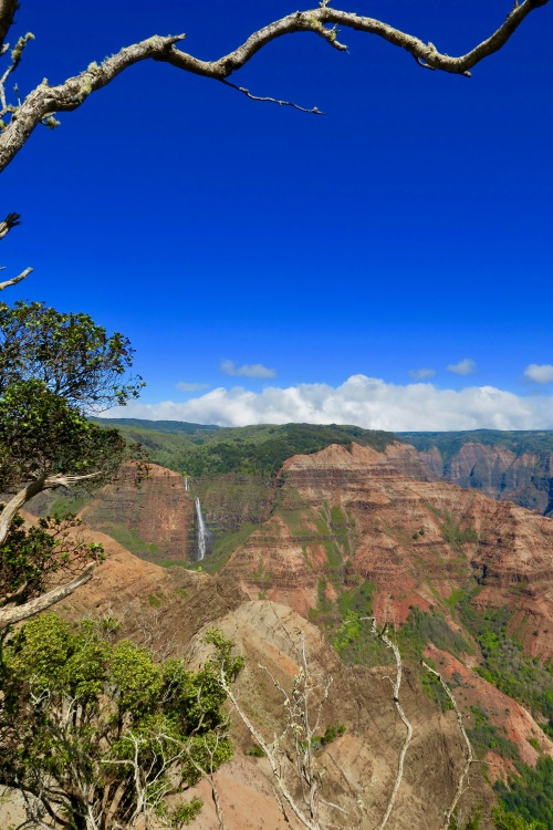 waimea-canyon-beauty