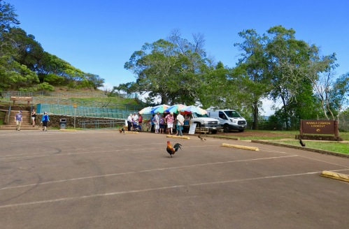 waimea-canyon-lookout-parking-lot-with-chickens